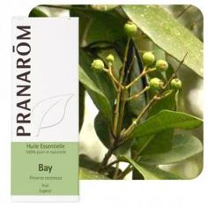Bay St Thomas - Pimenta racemosa 10 ml - Pranarôm