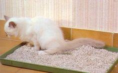Désodoriser la litière du chat grâce au bicarbonate de soude