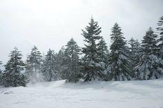 winter scene    The winter scenery of Kitayatsugatake