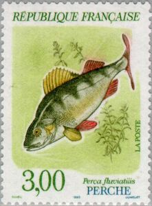 European Perch (Perca fluviatilis)