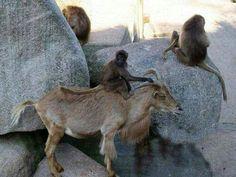 Unusual animal relationships