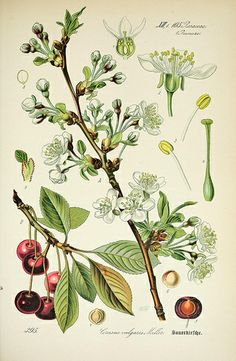 n342_w1150 by BioDivLibrary, via Flickr