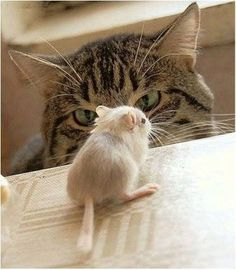 gatta-cicova Here, mousie, mousie. One more step, fella. That's it...come to Papa. You're gonna taste so good!