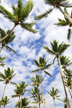 New Tropical Wallpaper Iphone Summer Palm Trees 61 Ideas Tropical Wallpaper, Summer Wallpaper, Trendy Wallpaper, Phone Backgrounds, Wallpaper Backgrounds, Tree Wallpaper Iphone, Phone Wallpapers, Tropical Background, Palmiers