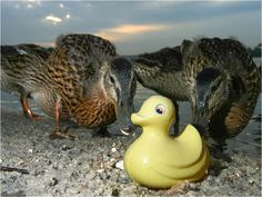 Why buy earthy bath toys? Growing Pains: Rubber Duckie, you're the one!