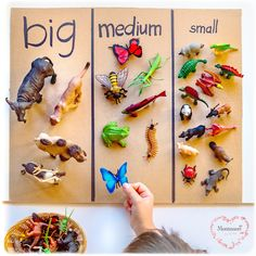 Safari-LTD-Animals-Sort-SIZE. SafariLtd animal size sorting is an effective Montessori sensorial activity to help children develop spatial awareness, critical reasoning, and problem-solving skills. Montessori Homeschool, Montessori Classroom, Montessori Toddler, Maria Montessori, Toddler Play, Toddler Preschool, Montessori Kindergarten, Montessori Bedroom, Baby Play