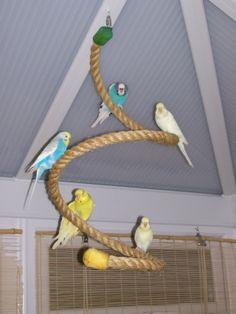 Výsledok vyhľadávania obrázkov pre dopyt hracky pre papagaja