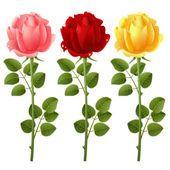 Roses — Stock vektor