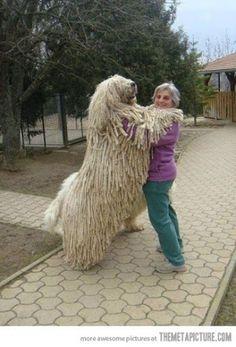 OMG DOG IS HUGE!