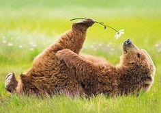 flower loving bruin