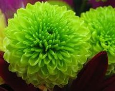 Image result for green flowers