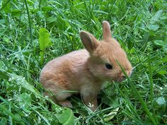 #GUESScolor Love seeing all the cute new baby animals of spring!