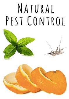 Natural pest control is less expensive than buying and applying pesticides, and it's safer for your family, your garden, and the environment!