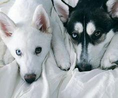 Dogs tőle: sandor_laszlone_nagy a We Heart It-en