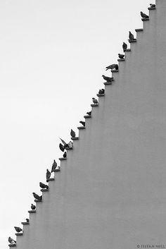 Schwarz-Weiß-Fotografie Inspiration: Pigeons Stairs By © Stefan Holl. Minimal Photography, Street Photography, Art Photography, Photography Software, Photography Hashtags, Inspiring Photography, Artistic Photography, Family Photography, Black White Photos