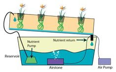 This entry was posted in Gardening, Hydroponics. plantnutrients.co
