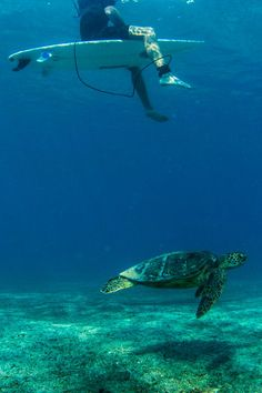Underwater... Hawaii... Photo: John Maher Photography...
