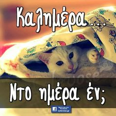 Kalimera Good Morning My Love, Morning Mood, Mornings, Life Is Good, Cat, Words, Quotes, Recipes, Stitches