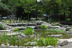 Richard Inchley Ponds & Aquaria | Pond, Landscaping, Design & Installation, Retail & Wholesale Waterplants, Waterlilies, Pondfish and Perennials, Ottawa, Ontario