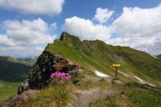 Zwischen Blumen und Gipfeln « Großarltal Blog