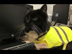 Felix the Huddersfield Station Cat Receives a Promotion