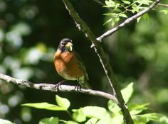 We are seeing robins earlier this year than last year - warm winter for New Jersey.