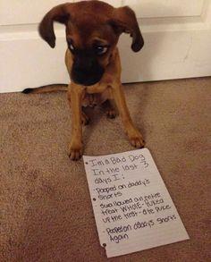 What An Active Dog! Ahahahahaha......