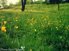 #yellow #flowers #fieldofflowers
