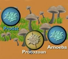 """Scholastic """"Five Kingdoms of Life"""" video explanation (plant, animal, fungus, protist, and bacteria)"""