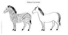 Czym się różnią zebra koń?