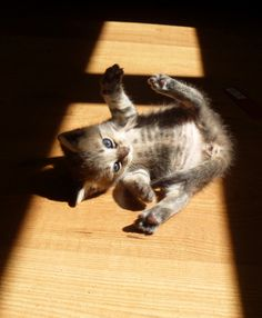 """""""If there is one spot of sun spilling onto the floor, I cat will find it and soak it up."""" --J A McIntosh"""