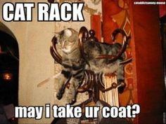 cat rack