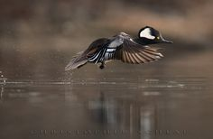 JUST FAST by CHRISTOPHER SCHLAF on 500px