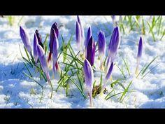 (40) L'ultima neve di primavera - Colonna Sonora del Film - Piero Gentili - YouTube