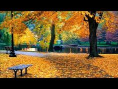 Picture of Autumn in Boston Public Garden, Massachusetts, USA stock photo, images and stock photography. 7 Places, Places To Visit, Boston In The Fall, Enrico Macias, Salem Halloween, Boston Public Garden, Boston Common, Boston Things To Do, Fall Displays