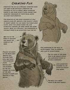 drawing Illustration art disney bear tutorials Character Design how to draw Animal Anatomy aaron blaise anatomy for artists Animal Sketches, Animal Drawings, Art Sketches, Cartoon Drawings, Bear Drawing, Furry Drawing, Drawing Tips, Drawing Reference, Bear Character