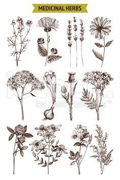 herbs sketch set. royalty-free stock vector art