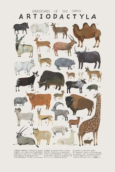 Natural history art prints by Kelsey Oseid #illustration #nursery #animals…