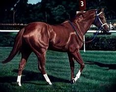 The gorgeous Secretariat...