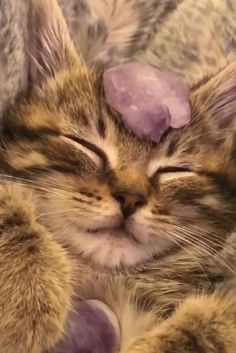 I Love Cats, Cute Cats, Cute Baby Animals, Funny Animals, Image Chat, Photo Chat, Cat Aesthetic, Cute Creatures, Pretty Cats
