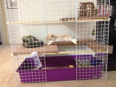 Lola's new NIC home - BinkyBunny.com - House Rabbit Information Forum - BinkyBunny.com - BINKYBUNNY FORUMS - HABITATS AND TOYS