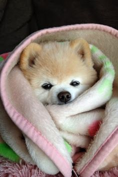 Cozy napping puppy