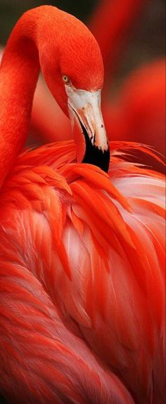 Image result for red flamingo
