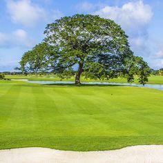 """@buenaventuragc's photo: """"La mejor cancha de #golf de #Panama diseñada por #NicklausDesign. Bienvenido a #BuenaventuraGolfClub #golfcourse"""""""