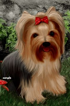 All your beautiful gifs in one place Yorkie Puppy For Sale, Yorkie Dogs, Kittens And Puppies, Yorkshire Terrier Dog, Beautiful Gif, Animals Beautiful, Animals And Pets, Cute Animals, Yorky