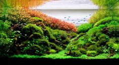 This 54l landscape aquarium by Leandro Artioli won the 2013 Brasilian Aquascaping contest in the nano category.