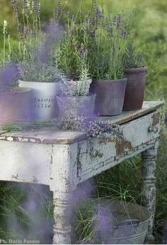 La Lavanda in terrazza Lavender Cottage, Lavender Fields, Lavander, French Lavender, Lavender Blue, Jardin Style Shabby Chic, Color Lavanda, Pot Jardin, Deco Floral