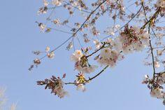 Gorgeous spring blooms at The Oregon Garden in Silverton, OR  #oregongarden
