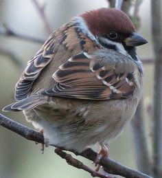 Sparrow. The most commonly seen bird of them all but I like them!