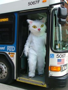 Kitty on the RTD (via Denver Public Library Teens)